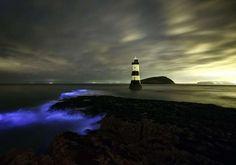 Blue light show from bioluminescent plankton on beach at Penmon, Wales, Britain - 17 Jun 2014 Glowin... - Rex Shutterstock