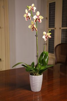 Aside from being easy to take care of, orchids rid the air of xylene, a pollutant found in many glues and paints so they make wonderful housewarming gifts for anyone who recently moved into or renovated a new space. Unlike some other plants, orchids also respire and give off oxygen at night – so they're great for the bedroom.