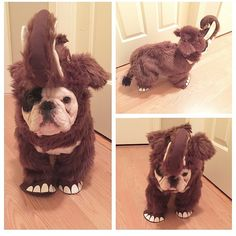 Wooly Mammoth Costume, Manny the French Bulldog, @manny_the_frenchie on instagram