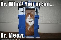 Dr. Who? You mean...  Dr. Meow