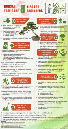 How To Start Your Own Organic Garden >>> Find out more at the image link.