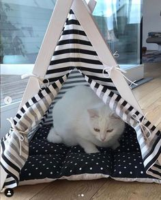 White cat in black&white teepee tent. Dog & Teepee - more than just dog and cat bed. We've created a space that your fur babies will love calling home. Cat Teepee, Teepee Bed, Like A Cat, All About Cats, Take A Nap, Dog Bed, Fur Babies, Cute Animals, Black White