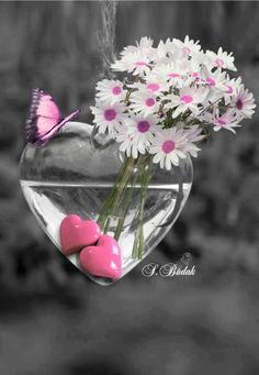 Splash of Colour Heart Wallpaper, Love Wallpaper, Wallpaper Backgrounds, Color Splash, Color Pop, Colour, Love Flowers, Beautiful Flowers, Beautiful Pictures