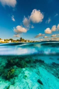 Underwater in Kralendijk, Bonaire Island, Caribbean #bonaire #travel