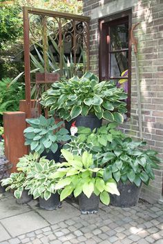 Container Herb Garden, Container Flowers, Container Plants, Garden Planters, Outdoor Flowers, Outdoor Plants, Outdoor Gardens, Deco Champetre, Flower Garden Design