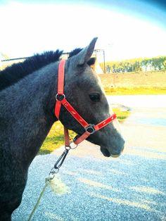 Maro the horse