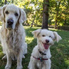 El refuerzo positivo y los premios sanos para perros