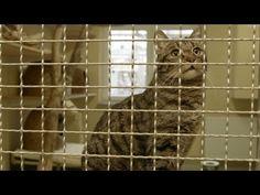 Katzen aus dem Tierheim adoptieren   myPG