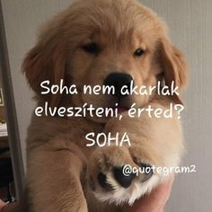 Sad Stories, Dogs And Puppies, Animals, Random, Animales, Animaux, Animal, Animais, Casual