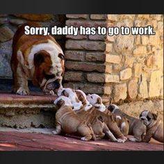#CEOBootCamp time!! Back to work...back to school...but daddy still loves you!!! #furrypawlife www.furrypawpics.com #instart #petart #art #instabullies #bulldog #bulliesofig #educatenyc #ihatemondays