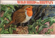"Brooke Bond Album - Wild Birds in Britain front Brooke Bond Tea ""Wild Birds in Britain"" front cover of album issued in 1965 Pg Tips, Ladybird Books, Nature Artists, Collector Cards, Picture Cards, My Childhood Memories, Love You More, Wild Birds, Album Covers"