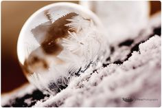 Amazing frozen bubble photos by 3 Peas Photography!