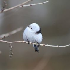 This Is The Korean Crow-Tit
