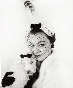 Dogs in Vogue - Henry Clarke