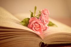 Swipe File, Home Photo, Still Life, Beautiful Pictures, Illustration, Flowers, Plants, Handmade, Inspiration