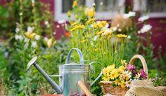 Fleurs : le calendrier annuel des semis - Côté Maison