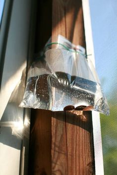 To keep flies away, fill a Ziploc bag with water and 5 or 6 pennies and hang it in the sun in the problem area. Apparently, it keeps flies and wasps away. Some say that wasps and flies mistake the bag for some other insect nest and are threatened. Keep Flies Away, Get Rid Of Flies, Fly Control, Pest Control, Fly Repellant, Fly Deterrent, Insect Repellent, Shoo Fly, Fly Traps