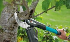 Obstbaumschnitt Tips for fruit tree trimming: The pruning serves to preserve the vitality of the fru Resin Patio Furniture, Cool Furniture, Ghost Plant, Tree Pruning, Backyard Retreat, Fruit Trees, Kids House, Horticulture, Perennials