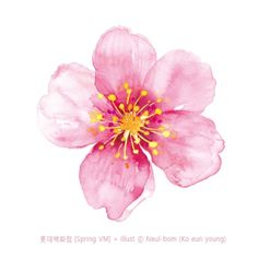 Cherry Blossom Watercolor, Cherry Blossom Art, Easy Watercolor, Watercolor Cards, Watercolour Painting, Watercolor Flowers, Painting & Drawing, Watercolours, Botanical Illustration