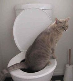 Teach your Cat to use the toilet - No more litter trays.  I'd almost try this just to see if it can be done.