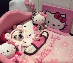 oh hello kitty. Chihuahua Love, Chihuahua Puppies, Cute Puppies, Cute Dogs, Cute Babies, Chihuahuas, Cute Little Animals, Cute Funny Animals, Funny Animal Pictures