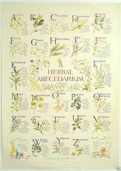 'Herbal Abecedarium' Herb Poster, Kitchen Witch, Hedge Witch, Herbalism