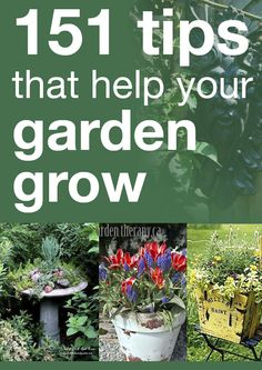 151 tips that help your garden grow