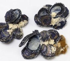 Mussel Brooches – Heather Collins  love these!