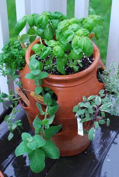 Image from http://www.thenaptimechef.com/wp-content/uploads/2011/05/Herb-Pot.jpg.