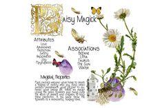 Magic Herbs, Herbal Magic, Plant Magic, Herb Art, Bellis Perennis, Hippie Movement, Daisy Petals, Wiccan Spell Book, Kitchen Plants