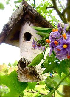 Nature Photography Autumn 'Tree House' Birch Bird House Spring Summer. $35.00, via Etsy.