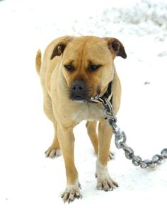 The ASPCA assisted with two major dog fighting raids this year, saving over 400 dogs from both freezing snow and blazing heat. Revisit their stories with this heartwarming video: www.aspca.org/blog/look-back-hundreds-dogs-rescued-fighting-2013