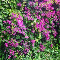 Belleza natural. #flowers