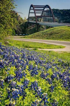 Blue bonnets Austin, TX