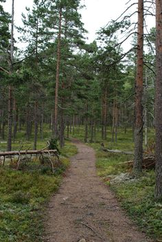 Summer Berries, Summer Is Coming, Botany, Finland, Paths, Natural Beauty, Trail, Hiking, Country Roads