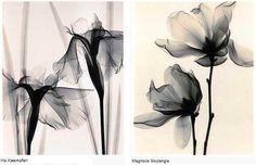 Dark Roasted Blend: Radical X-Ray Art flowers by Judith McMillan