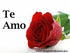 14 Imagenes de hermosas rosas con frase Te Amo - http://www.imagenesdeamor.pro/2014/11/14-imagenes-de-hermosas-rosas-con-frase-te-amo.html