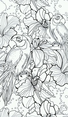 adult parrot difficult coloring pages printable and coloring book to print for free. Find more coloring pages online for kids and adults of adult parrot difficult coloring pages to print. Bird Coloring Pages, Adult Coloring Book Pages, Colouring Pics, Coloring For Kids, Printable Coloring Pages, Coloring Sheets, Coloring Books, Colorful Pictures, Illustration