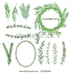 Hand drawn set of rosemary flowers, wreaths and decoration elements. vector illustration