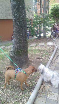 Muñe en el parque, evento perruno, saludando amiguitos