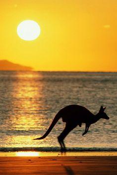 Atardecer en Australia / Canguro