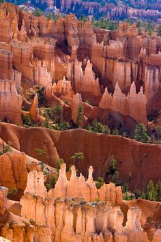 The Hoodoos in Bryce Canyon