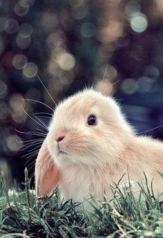 #Vlekken die op de bodem van het #konijnenhok zitten zijn eenvoudig schoon te maken door heet water met een scheutje schoonmaakazijn erdoor even in te laten trekken. Daarna met een schuursponsje/borstel de plek goed schrobben en goed naspoelen met water! Zo heeft je konijn weer een lekker schoon hok! Meer huishoudelijke tips? www.hulpstudent.nl