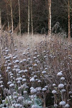 Wilson McWilliam Chorleywood Garden215 | Flickr - Photo Sharing!