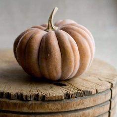 White Pumpkins, Fall Pumpkins, Halloween Pumpkins, Halloween Ideas, City Farmhouse, Thanksgiving, Ivy House, Slow Living, A Pumpkin