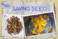 Seed Saving jules-te-reo font Wide Brimmed Hats, Seeds, Fonts, Create, Garden, Design, Designer Fonts, Garten, Types Of Font Styles