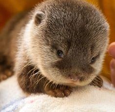 baby otter via baby animal zoo