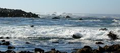 Monterrey Bay, along 17 Mile Drive - SCUBA check out dive for certification was here.