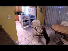 Amazing Dog Sam's Freshpet Fridge Break-In. I'm a sucker for an adorable pet commercial!