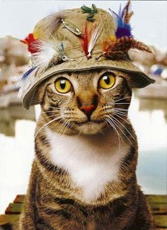 Fishing kitty